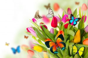 la-primavera